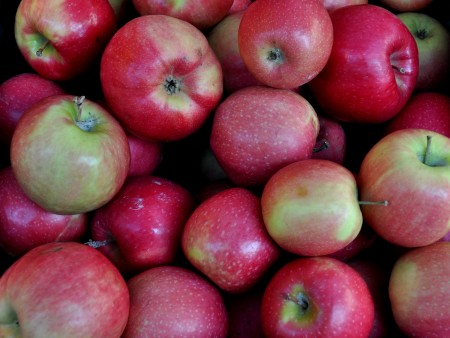 Organic Pink Lady apples from ACMA Mission Orchards. Photo copyright 2012 by Zachary D. Lyons.