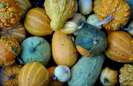 Ornamental gourds from Boistfort Valley Farm.Decorative faceplates for your electrical outlets and switches from Dimensional  Colors. Photo copyright 2012 by Zachary D. Lyons.