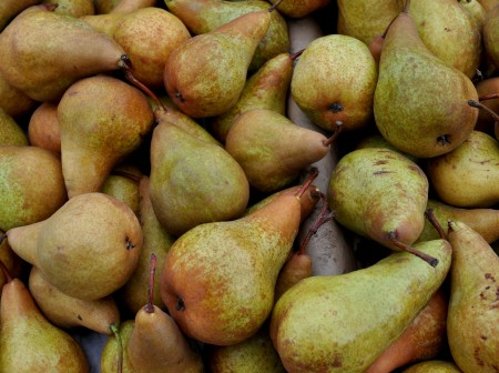 Bosc pears from Collins Family Orchards. Photo copyright 2012 by Zachary D. Lyons.