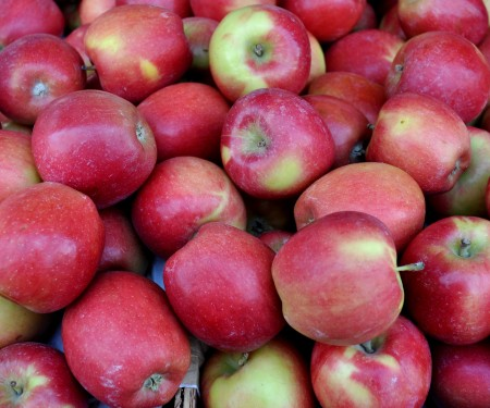 Pa-zazz apples from Collins Family Orchards. Photo copyright 2012 by Zachary D. Lyons.