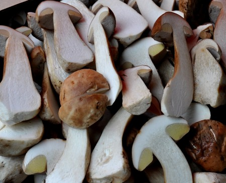 Wild porcini mushrooms from Foraged & Found Edibles. Photo copyright 2012 by Zachary D. Lyons.