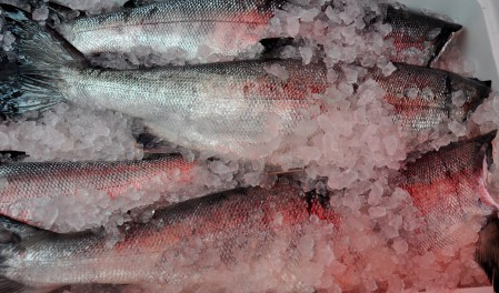 Fresh, whole, Puget Sound Keta salmon from Loki Fish at Ballard Farmers Market. Copyright Zachary D. Lyons.