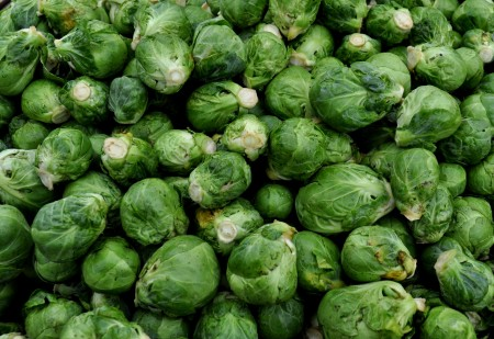Brussels sprouts from Nash's Organic Produce. Photo copyright 2012 by Zachary D. Lyons.
