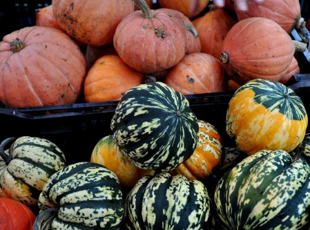 Winter squash from Stoney Plains Organic Farm. Photo copyright 2012 by Zachary D. Lyons.
