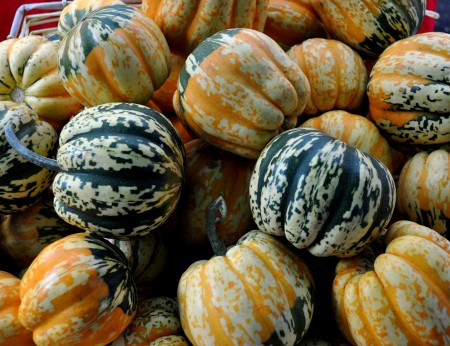 Carnival squash from Colinwood Farms. Photo copyright 2012 by Zachary D. Lyons.