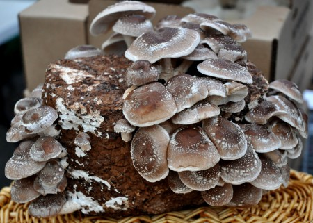 Shiitake mushrooms from Sno-Valley Mushrooms. Photo copyright 2012 by Zachary D. Lyons.