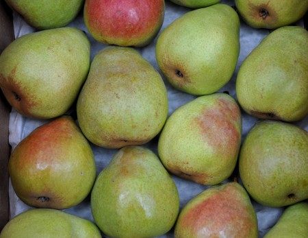 D'Anjou pears from Booth Canyon Orchards. Photo copyright 2013 by Zachary D. Lyons.