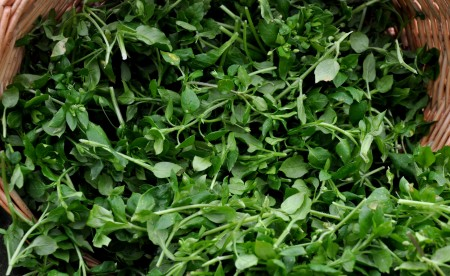 Chickweed, a.k.a., Satin Flower, from Nash's Organic Produce. Photo copyright 2013 by Zachary D. Lyons.