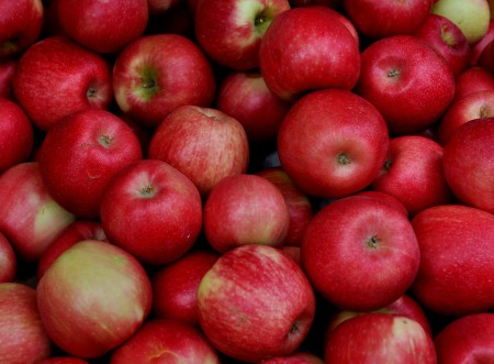 Honey crisp apples from Collins Family Orchards. Photo copyright 2013 by Zachary D. Lyons.