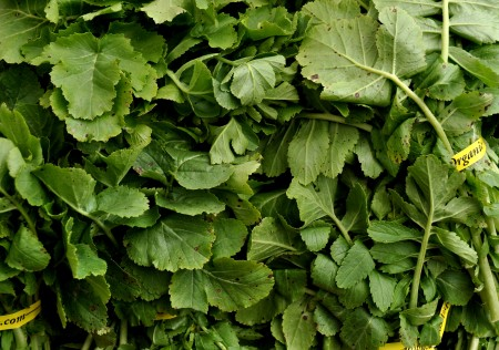 Daikon radish greens from Nash's Organic Produce. Photo copyright 2013 by Zachary D. Lyons.