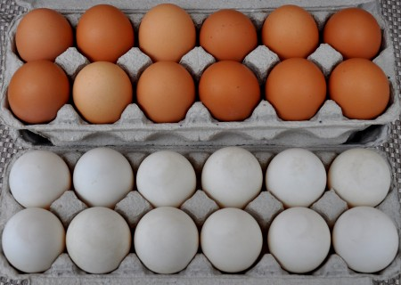 Chicken (top) and duck eggs from Stokesberry Sustainable Farm. Photo copyright 2013 by Zachary D. Lyons.