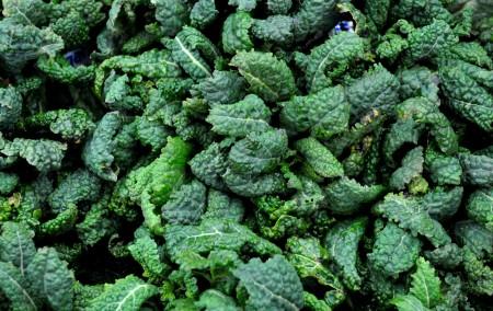Dino (lacinato) kale from Stoney Plains Organic Farm. Photo copyright 2013 by Zachary D. Lyons.