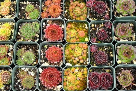 Succulents from Phocas Farms. Photo copyright 2013 by Zachary D. Lyons.