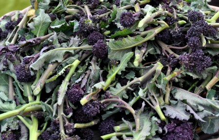 Purple sprouting broccoli. Photo copyright 2013 by Zachary D. Lyons.