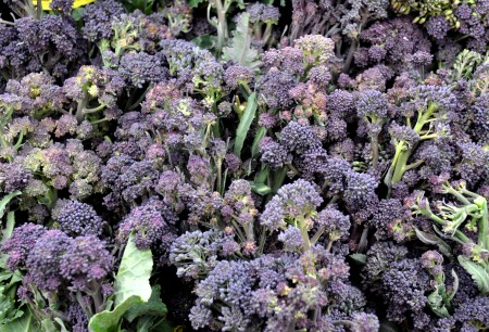 Purple sprouting broccoli from Nash's Organic Produce. Photo copyright 2013 by Zachary D, Lyons.
