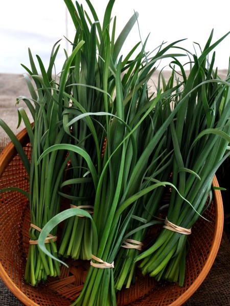Nira (garlic-onion chive) from Gaia's Natural Goods. Photo copyright 2013 by Zachary D. Lyons.