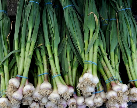 Green garlic from Magana Farms. Photo copyright 2013 by Zachary D. Lyons.