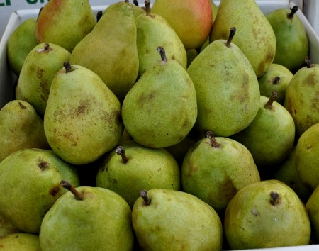 D'Anjou pears from Martin Family Orchards. Photo copyright 2013 by Zachary D. Lyons.
