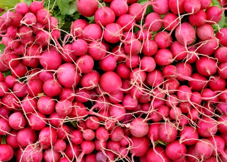Pink Beauty radishes from One Leaf Farm. Photo copyright 2013 by Zachary D, Lyons.