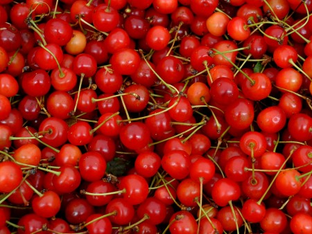 Pie cherries from ACMA Mission Orchards. Photo copyright 2013 by Zachary D. Lyons.