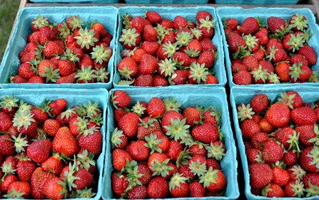Strawberries from Alm Hill Gardens. Photo copyright 2013 by Zachary D. Lyons.