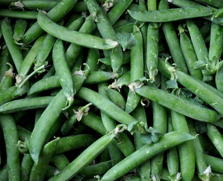 English shelling peas from Alvarez Organic Farms. Photo copyright 2013 by Zachary D. Lyons.