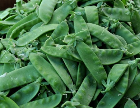 Snow peas from Alvarez Organic Farms. Photo copyright 2014 by Zachary D. Lyons.