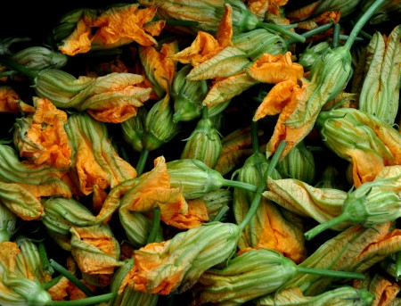 Squash blossoms from Alvarez Organic Farms. Photo copyright 2013 by Zachary D. Lyons.