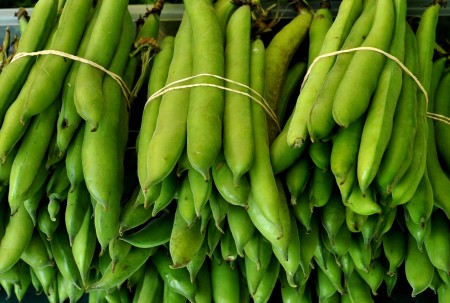 Fresh fava beans from Children's Garden. Photo copyright 2013 by Zachary D. Lyons.