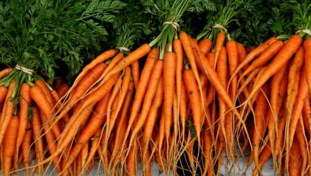Carrots from Gaia's Harmony Farm. Photo copyright 2013 by Zachary D. Lyons.