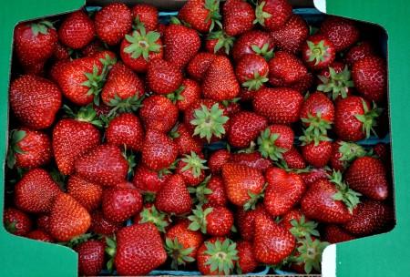 Certified organic strawberries from Gaia's Harmony Farm. Photo copyright 2013 by Zachary D. Lyons.