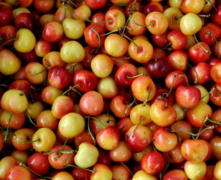 80-11 Rainier cherries from Lyall Farms. Photo copyright 2012 by Zachary D. Lyons.