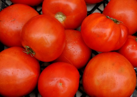 Tomatoes from Magana Farms. Photo copyright 2013 by Zachary D. Lyons.