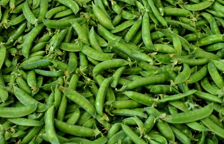 English shelling peas from Stoney Plains Organic Farm. Photo copyright 2013 by Zachary D. Lyons.