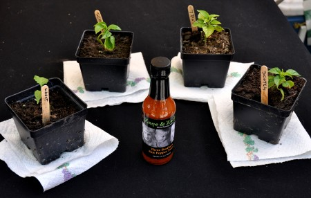 Three Brothers Sauce from Zane & Zack's flocked by the plants of the world's four hottest peppers. Photo copyright 2013 by Zachary D. Lyons.