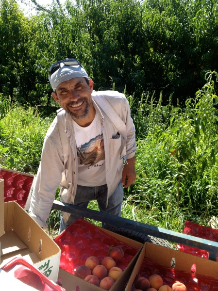 Roberto Guerrero from ACMA Mission Orchards. Photo copyright 2013 by Nicole Reed.