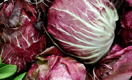 Radicchio from Boistfort Valley Farm. Photo copyright 2013 by Zachary D. Lyons.