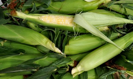 Sweet corn from Lyall Farms. Photo copyright 2013 by Zachary D. Lyons.