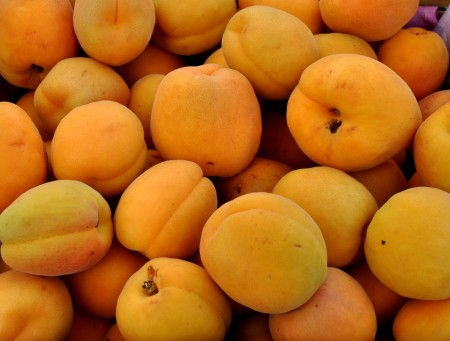 Perfection apricots from Martin Family Orchards. Photo copyright 2013 by Zachary D. Lyons.
