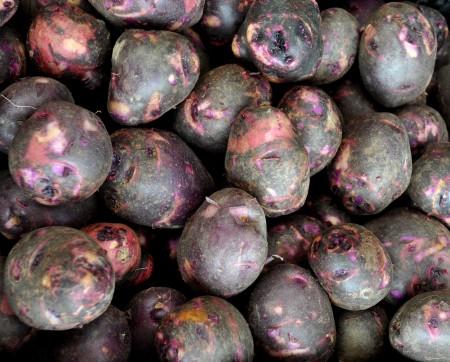 Viking purple potatoes from Olsen Farms. Photo copyright 2013 by Zachary D. Lyons.