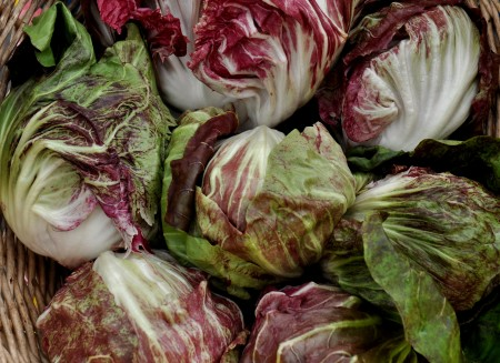 Pallo Rossa radicchio from Oxbow Farm. Photo copyright 2013 by Zachary D. Lyons.