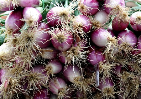 Tropea onions from Oxbow Farm. Photo copyright 2013 by Zachary D. Lyons.