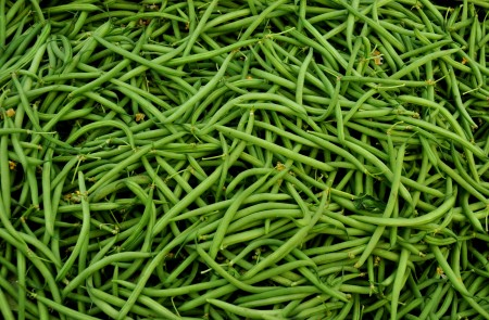 Hericot vert green beans from Stoney Plains Organic Farm. Photo copyright 2013 by Zachary D. Lyons.