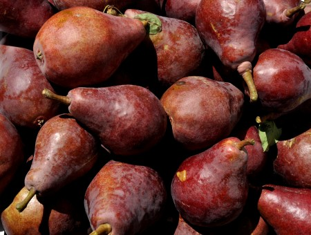 Purple Sensation pears from ACMA Mission Orchards. Photo copyright 2013 by Zachary D. Lyons.