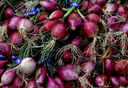 Red pearl onions from Boistfort Valley Farm. Photo copyright 2013 by Zachary D. Lyons.