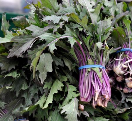 Purple mizuna from Boistfort Valley Farm. Photo copyright 2013 by Zachary D. Lyons.