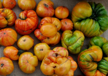 Copia heirloom tomatoes from One Leaf Farm. Photo copyright 2013 by Zachary D. Lyons.