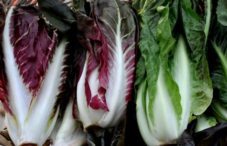 Treviso radicchio from Oxbow Farm. Photo copyright 2013 by Zachary D. Lyons.