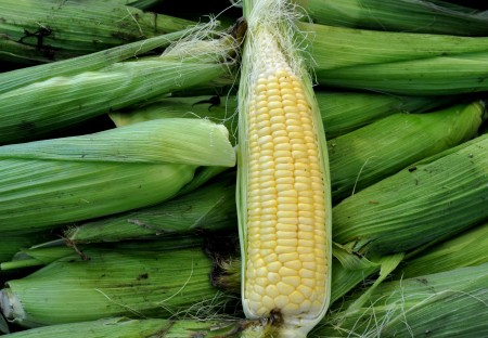 Sweet corn from Stoney Plains Organic Farm at Ballard Farmers Market. Copyright Zachary D. Lyons.