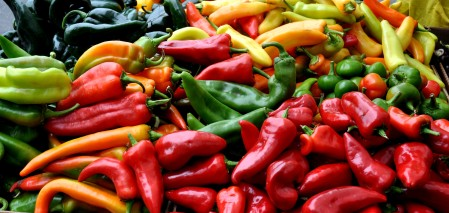 Hot chile peppers from Alvarez Organic Farms. Copyright Zachary D. Lyons.